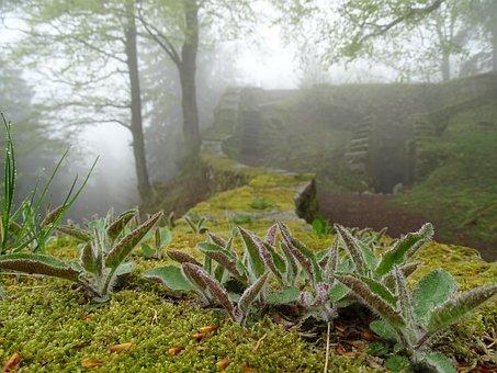 Wall, Castle, Ruin, Fog, Moss, Autumn, Cold, Creepy