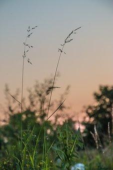 Landscape, Sunrise, Sunset, Trees, Sun, Valley, Nature