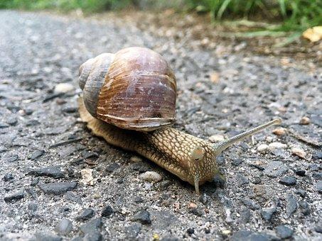 Snail, Animal, Nature, Grass, Shell, Natural, Wildlife