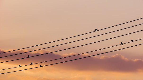 Birds, Wire, Sunset, Sky, Colors, Dusk, Silhouette