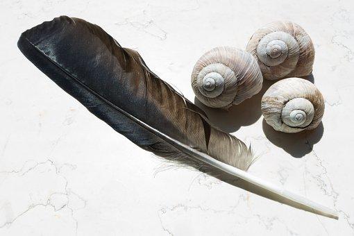 Spring, Snail Shells, Raven's Feather, Shimmer, Shine