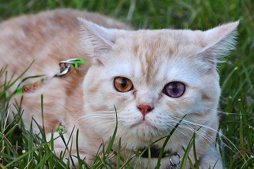 Cat, Pets, Cute, Sweet, Kitty, Baby Animal, Whisker