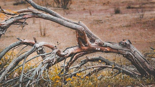 Portugal, Tree, Dead, Dry