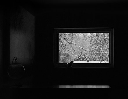 Bird, Window, Winter, Alone, Isolation