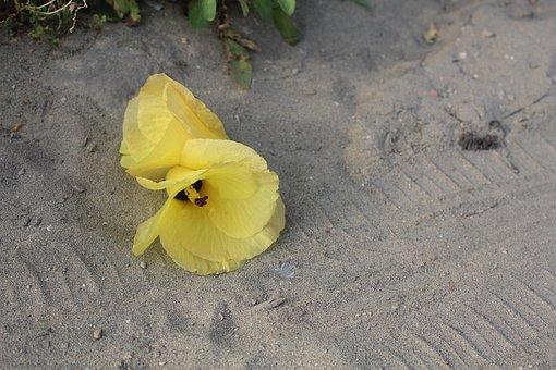 Hibiscus, Yellow, Flower