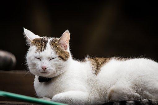 Cat, Pet, Animal, Domestic Cat, Red Cat