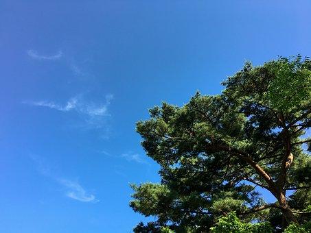 Pine, Nature, Sky, Korea, Beautiful, Park, Landscape