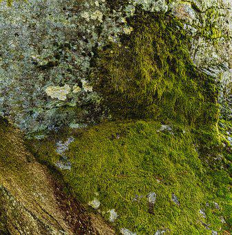 Texture, Rock, Cliff, Moss, Structure, Background