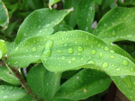 Plant, Droplet, Water Droplet, Rain
