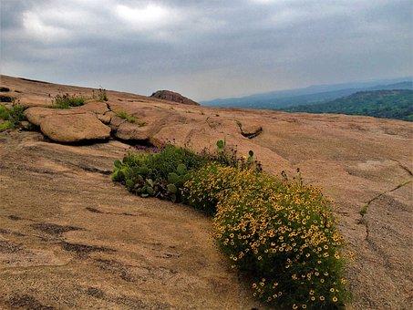 Enchanted Rock Texas, Landscape, Wild Flowers