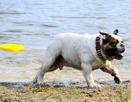 Dog, Beach, Most Beach, Water, Pet, Fun, Young Dog