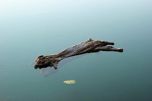 Wood In Water, Heavy, Lake, Green, Natural, Leaf