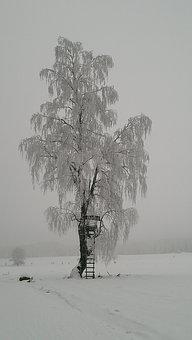 Snow, Winter, Cold, Frost, Nature, Tree, Ice, Freeze