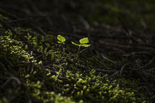 Forest, New, Leaf, Growth, Arrival, Spring, Nature