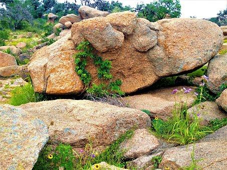 Pink Granite, Enchanted Rock Texas, Wild Flowers, Vines