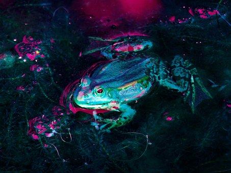 Frog, Pond, Water, Garden Pond, Aquatic Animal