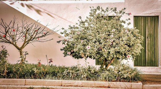 Portugal, Street, Flowers, Algarve