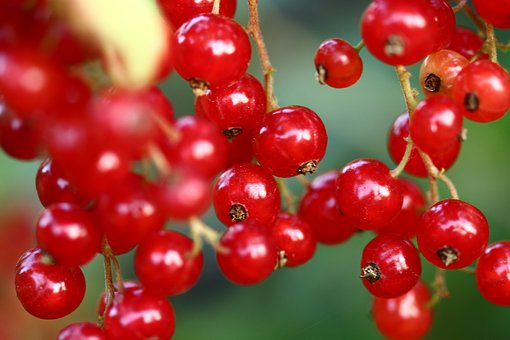 Currant, Currants, Berries, Nature, Fruits, Red