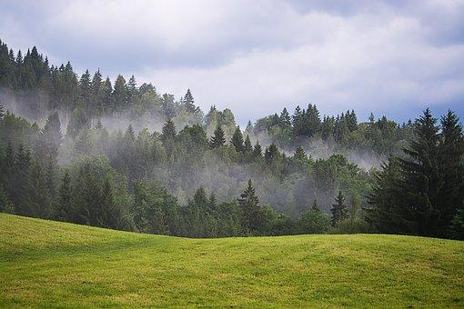 Landscape, Nature, Meadow, Trees, Conifers, Sky, Clouds