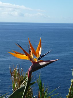 Caudata, Strelitzia Orchids, Caudata Greenhouse