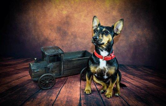 Dog, Vintage, An, Animal, Retro, Design, Pet, Cute
