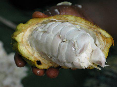 Cocoa, Pod, Food, Organic, Cacao, Bean, Natural