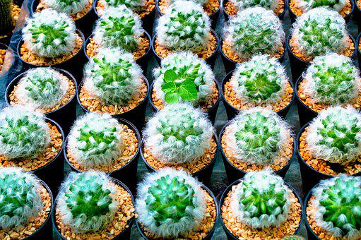 For All Skin Types, Cactus, Jardiniere, Flower Pot