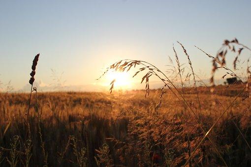 Sunset, Evening, Grass, Landscape, Outdoor, Nature