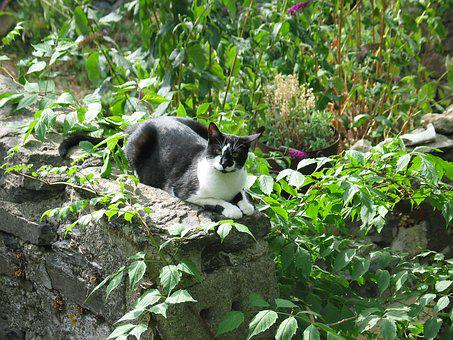 Cat, Cats, Pet, Mammal, Animal, Black, White, Are, Rest