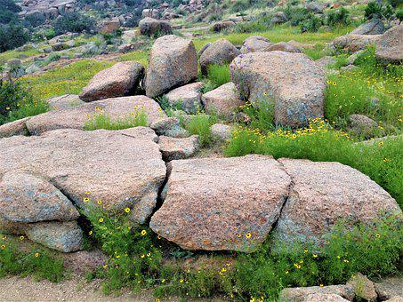 Pink Granite, Wild Flowers, Enchanted Rock Texas