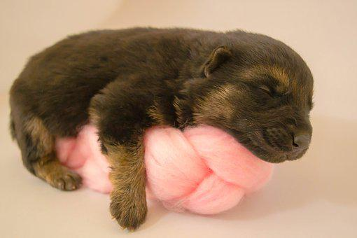 Puppy, Newborn, Adorable, Pet, Dog, Cute, Baby, Little
