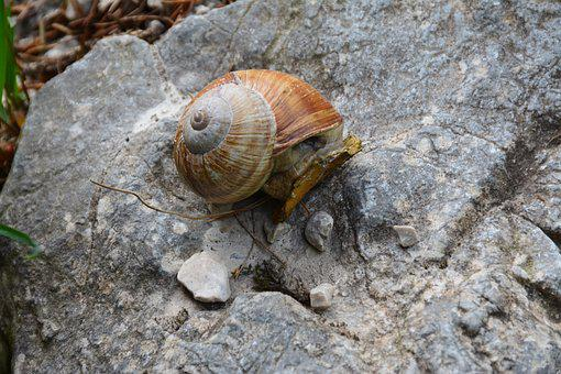 Snail, Mollusc, Nature