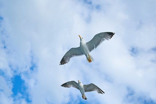 Seagull, Bird, Gulls, Day, Birds, Clouds, Blue, Nature