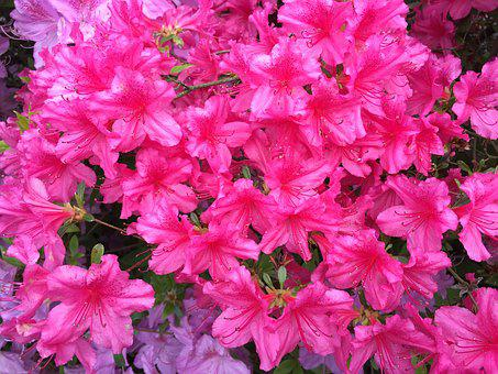 Pink, Fuschia, Landscape, Nature, Flower, Bloom