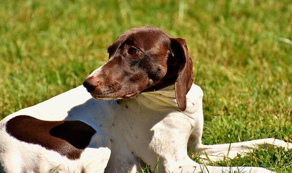 Dog, Meadow, Dear, Cute, Good, Concerns, Animal