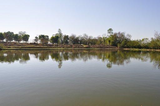 Lake, Fish-pay, Fishing Boat, Fish, Brazil, Fish Brazil