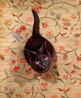 Cat, Carpet, Gray, Pretty, Pet, Animal, Adorable