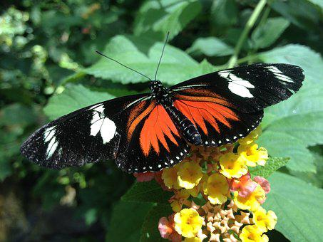 Butterfly, Greenhouse, Wings