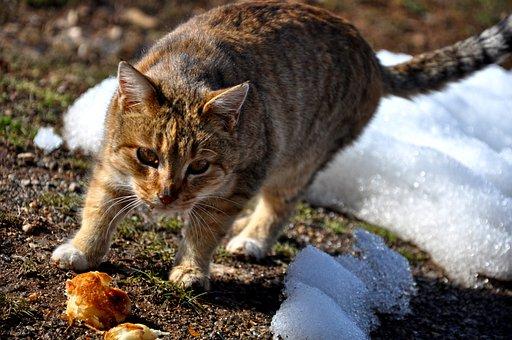 Cat, Meow, Tabby Cat, Istanbul, Street, Animal, Animals