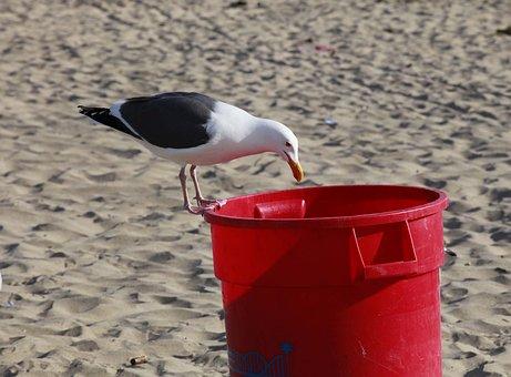 Seagull, Trash, Bird, Rubbish, Garbage, Seabird