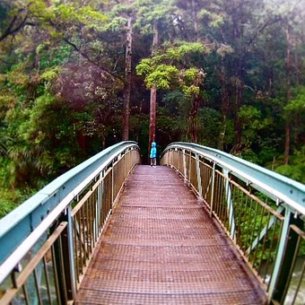 Bridge, Night If, New Zealand, Whangarei Falls