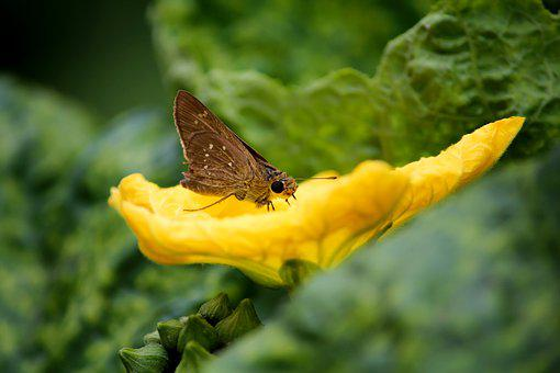 Buterfly, Flower, Nature, Leaf, Green
