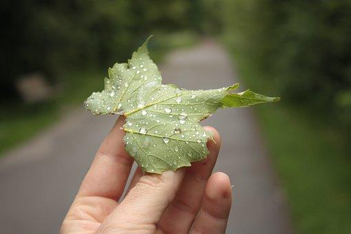 Leaf, Raindrop, Dew, Hand, Nature, Closeup, Green