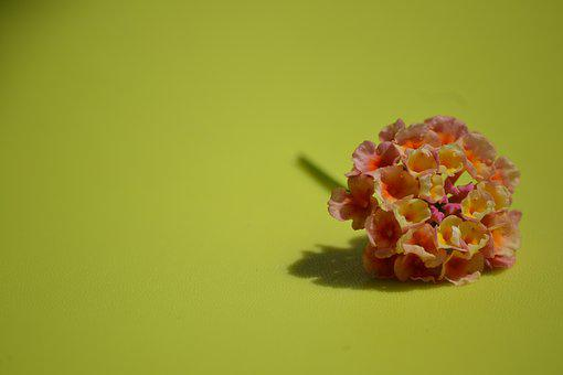 Flower, Delicacy, Detail, Nature, Love, Spring