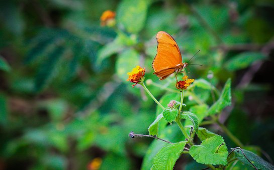 Butterfly, Fly, Insect, Nature, Animal, Wing, Spring