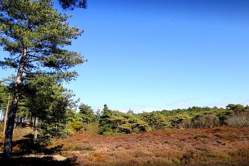 Moorland, Nature, Moor, Heather, Green, Park