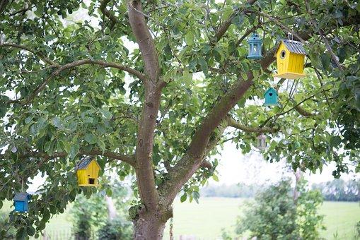 Bird Houses, Bird, Tree, Apple Tree, House, Animal