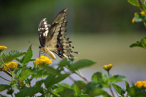 Butterfly, Nature, Green, Landing, Insects, Mariposa