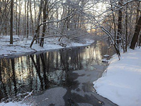 Stream, River, Nature, Woods, Bare Trees, Light, Forest