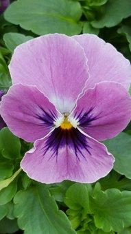 Flower, Blossom, Bloom, 400–500, Purple, Nature